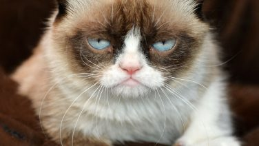 Grumpy-Cat-Releases-Second-Book.jpg