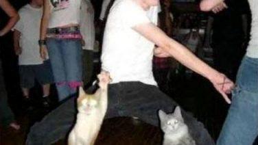 cat-disco.jpg
