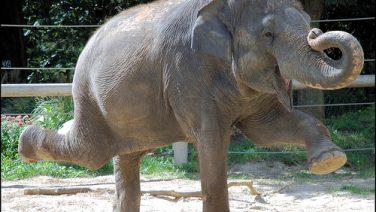dancing-elephant1.jpg