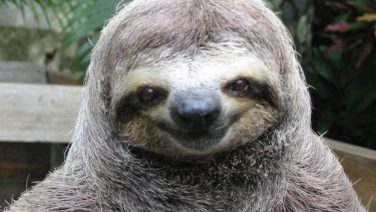 happy-smug-sloth.jpg