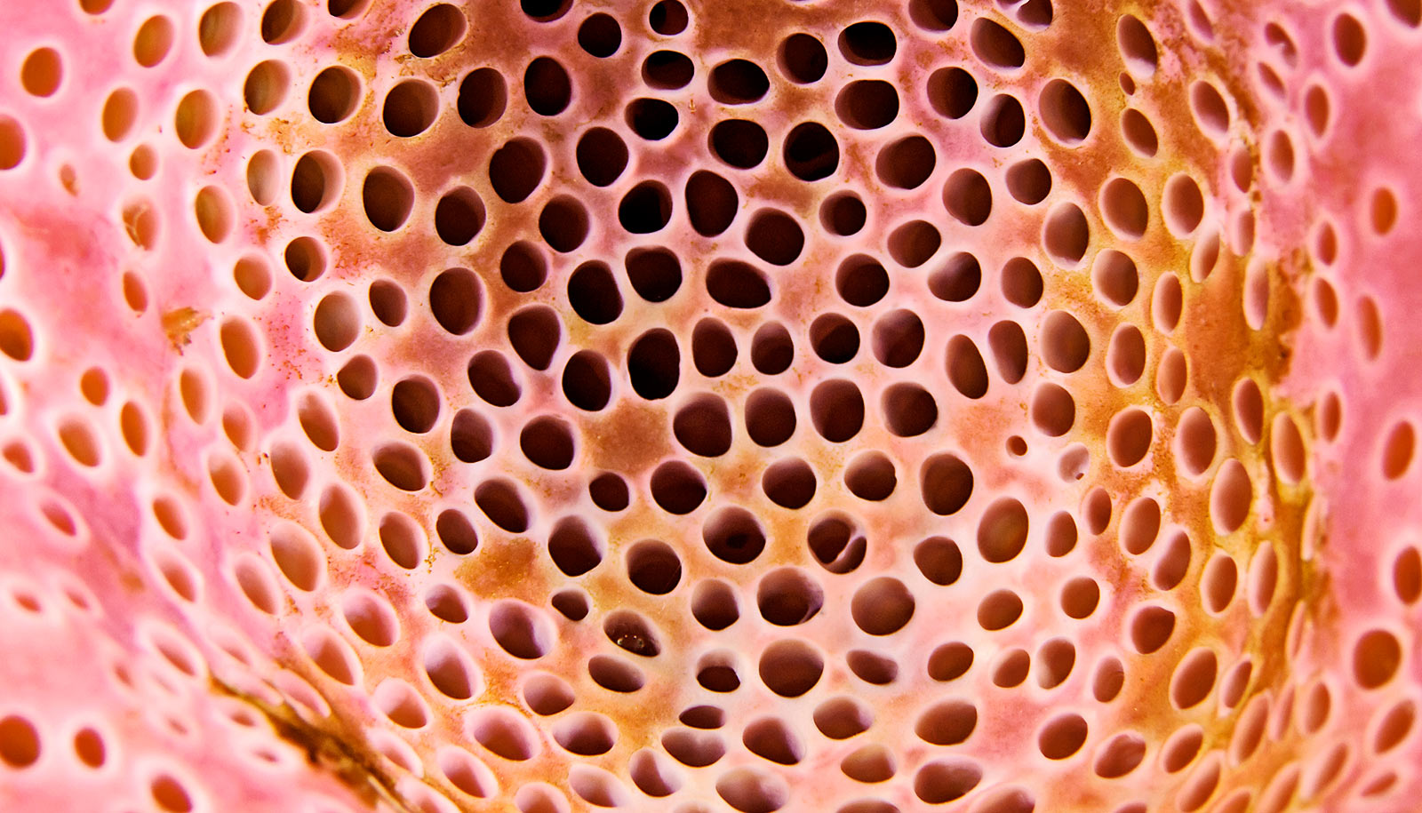 Lil Holes