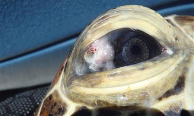 turtle eye