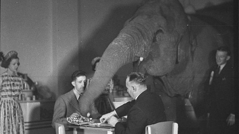 800px-SLNSW_23313_Elephants_tea_party