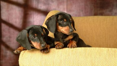 bedroom-interior-furniture-livingroom-king-mattress-size-twin-dogs-sitting-best-mattress-brand-on-cream-sofa-hd-image-twin-mattress-size-twin-sofa.jpg