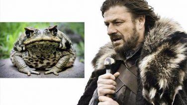 Cane Toad Meme