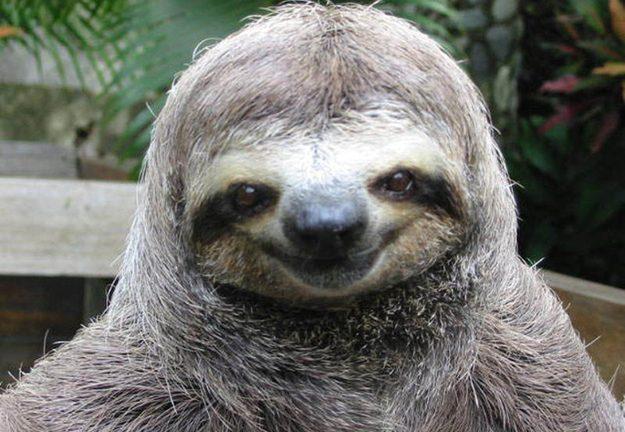 happy-smug-sloth.jpg