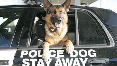 police-dog.jpg