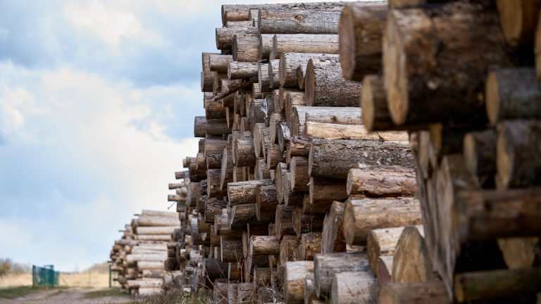 Rows,Of,Piled,Of,Logs,,,Waiting,To,Be,Processed,